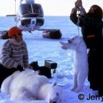 Weigh polar bear cub