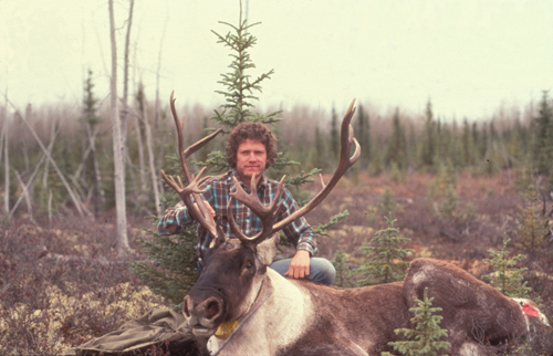 Jon Jorgensen and an immobilized caribou bull