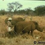 White rhino and askari 1967