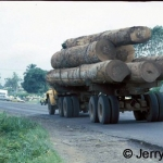 African hardwood on its way to Europe
