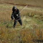 Hay scything