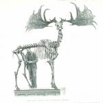 JG Millais\' picture of extinct