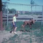 Karen and a moose calf