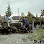 Drugged moose in a front-end loader