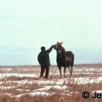 Moose walking - the approach