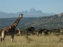 African hoofed animals