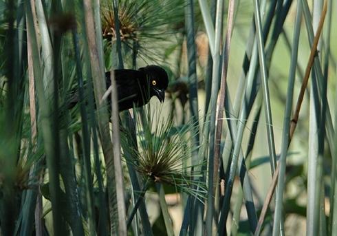 Vieilloits-w-papyrus-re-72
