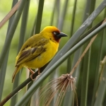 Northern-brown-throated-weaver-crop-72
