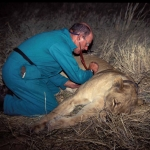 lion check-up