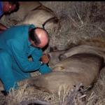 lion-pulse-caprivi500