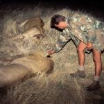 lions-at-night-caprivi500