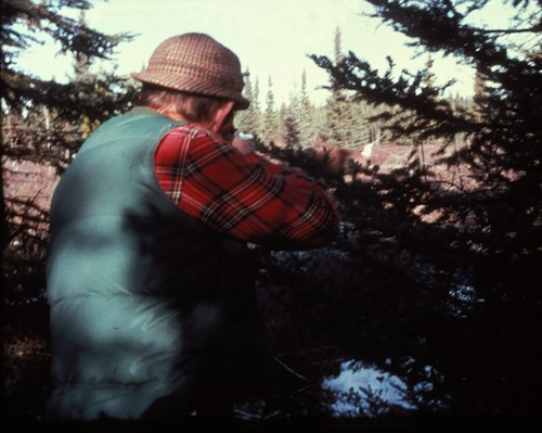 darting a caribou from ambush in the Birch Mountains, Alberta, Canada