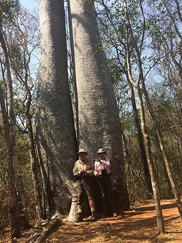 J&J against baobab