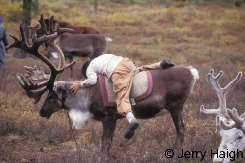 Boy mounting reindeer