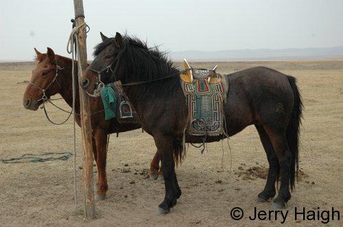 More horses & saddles