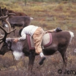 Boy mounting reindeer