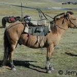 Mongolian horse I rode