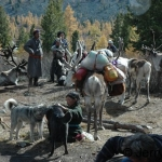 Reindeer camp on the move