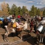 Reindeer camp loading up