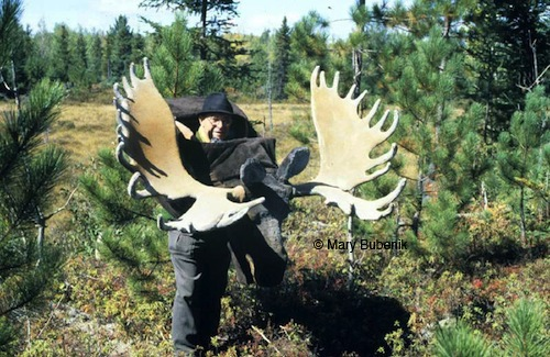 Tony Bubenik and a huge dummy head and antlers used in his behavioural research